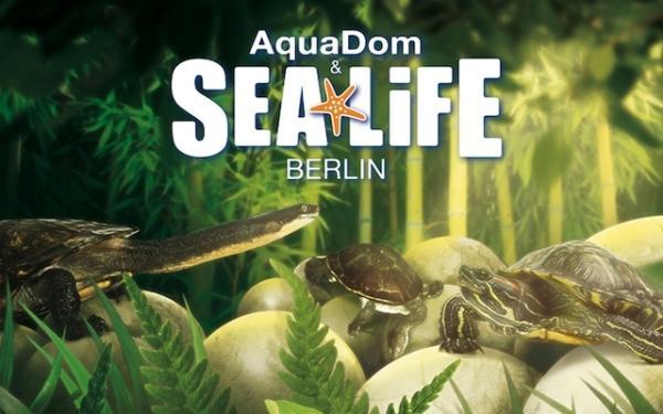 Aquadom Sea Life Berlin Bis 18 Sparen Bei Eintritt Schildkröten